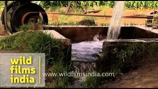 Diesel powered irrigation pump - India