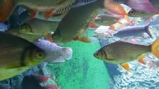 Большой пресноводный аквариум