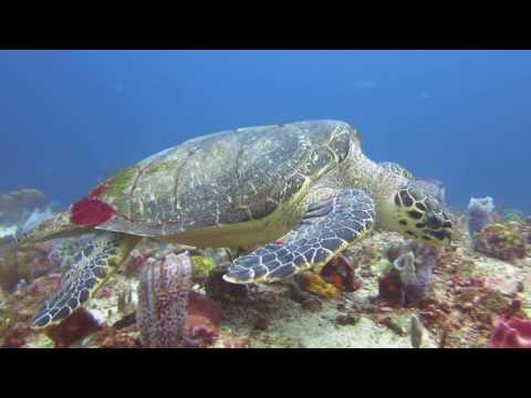 Diving Martinique HD 720p