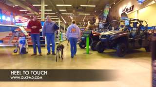 German Shorthair Pointer Puppy learns off leash obedience with Off Leash K9 Training, Maryland | Off Leash K9 Training Maryland