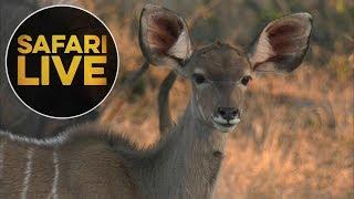 safariLIVE - Sunset Safari - June 21, 2018 thumbnail