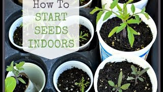 Begginner Gardening: How to Start Seeds Indoors
