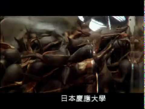TVBS電視-沉香 即將消失的香味