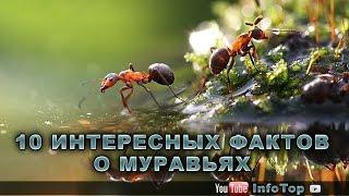 10 интересных фактов о муравьях