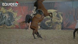 500 chutes à cheval pour votre sécurité