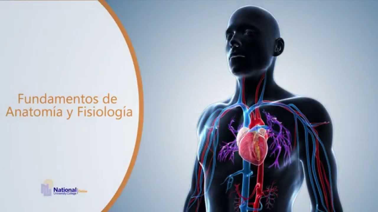 Fundamentos de Anatomía y Fisiología