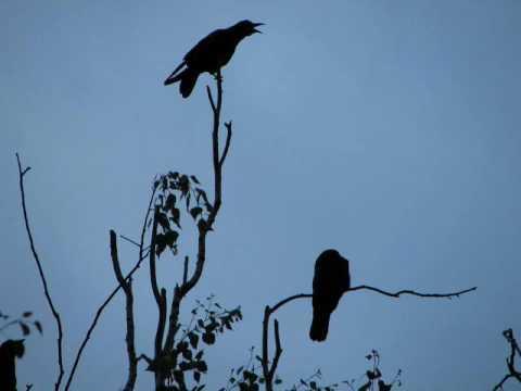 настя полева - на небе вороны