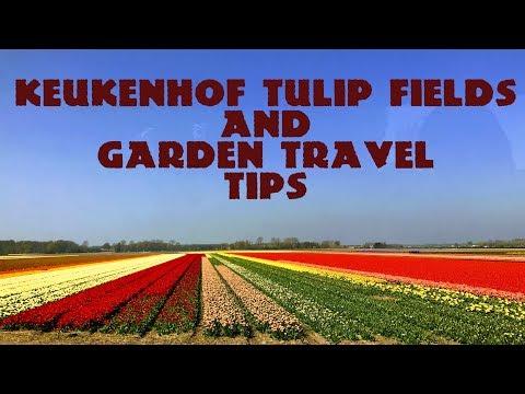 Amsterdam: Keukenhof Tulip & Flower Garden - Travel Tips | Holland