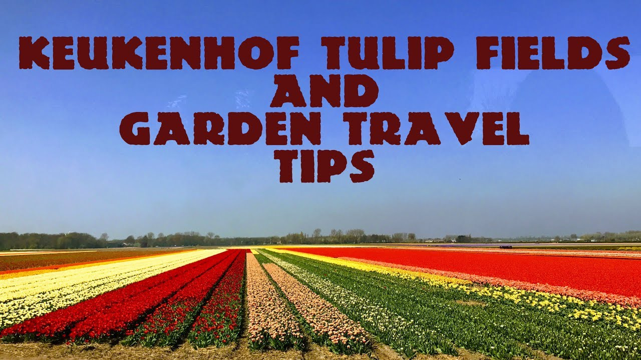 Amsterdam: Keukenhof Tulip U0026 Flower Garden   Travel Tips | Holland