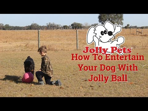 how-to-use-jolly-ball-||-real-dog-review