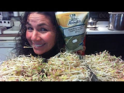 Mung Bean Sprouts Grown At Home Great For Raw Vegans