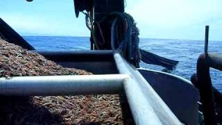 West Coast Shrimping/commercial Fishing