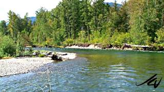 Adams River Sockeye Salmon Run Roderick Haig-Brown Provincial Park