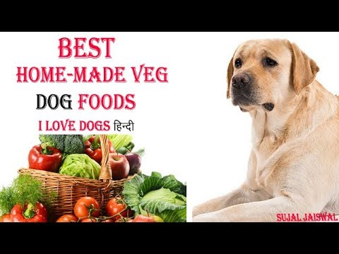 best-foods-for-dogs-,-veg-dog-food-,-homemade-dog-foods---in-hindi
