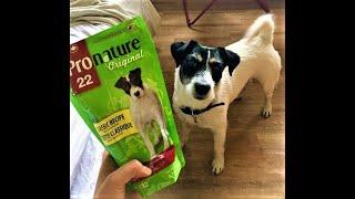 Парсон Рассел Терьер  | Как воспитать собаку | Завести собаку | Факты о породе