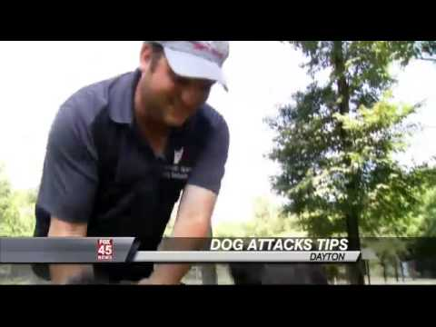 How to Protect Yourself if a Dog Attacks: DAYTON -- Dogs are man's best friend, and while most never show aggression, it can happen.