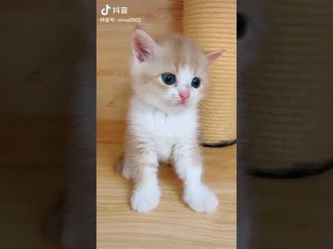 Mèo con mắt xanh đáng yêu