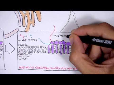 Microbiology - Hepatitis C Virus