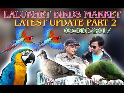 Lalukhet Birds Market Latest Update Part 2 ( JamshedAsmi Informative Channel In Urdu/Hindi)
