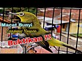 Pancingan Pleci Agar Buka Paruh Macet Bunyi Langsung Nyaut  Mp3 - Mp4 Download