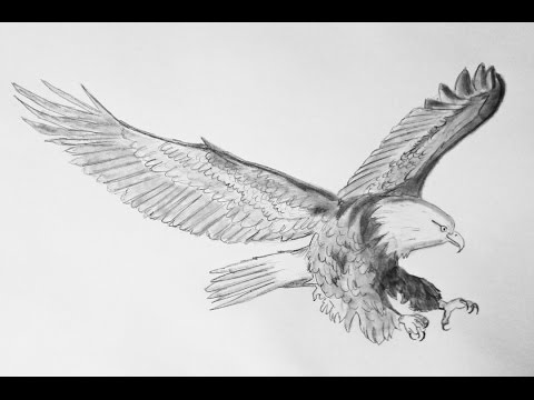 Como dibujar un aguila - How to draw an eagle - YouTube