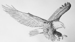 Como dibujar un aguila - How to draw an eagle