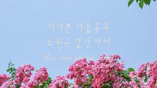 [감성로그] 중랑천에 피어난 여름꽃상계동에 레알 커피맛…