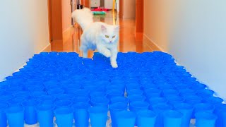 Can Cats Jump Over Cup Floor?