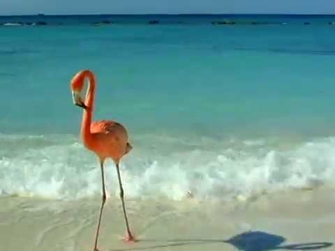 Renaissance Aruba Marina Hotel Ocean Suites