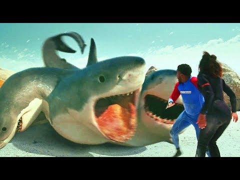 ��嚎】6个头的大白鲨你�过么?
