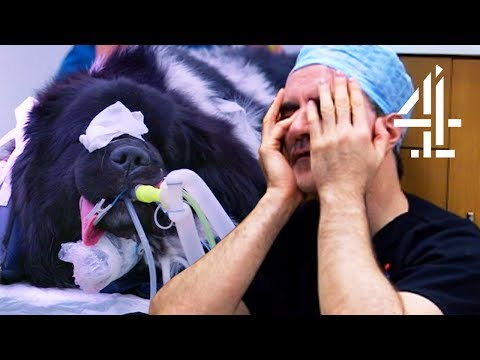 Performing Surgery On A Dog Until 2am | The Supervet