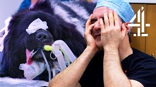 Performing Surgery On A Dog Until 2am   The Supervet