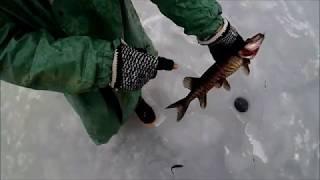 Ленинградская обл Рыбалка на Лесных Озёрах Чёрный Окунь и Щука 2020
