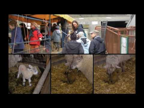 Brighton Montessori School - Trip To Coombes Farm
