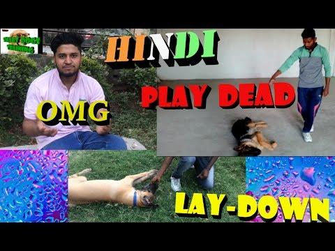 Apne Dog Ko lay down aur play dead kaise sikhaye || dog training in hindi ||