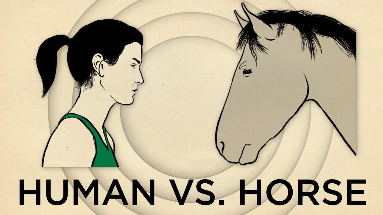 Human Vs. Horse Marathon  | NPR's SKUNK BEAR
