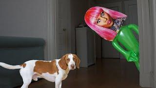 Dog vs Nicki Minaj Pranks: Funny Dogs Maymo & Potpie Prank Each Other