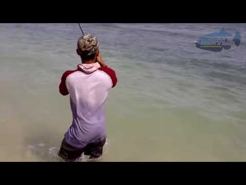 ACEH ultralight casting bluefin trevally Up 4Kg   YouTube