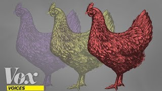 Want to save animal lives without going veg? Eat beef, not chicken. by : Vox