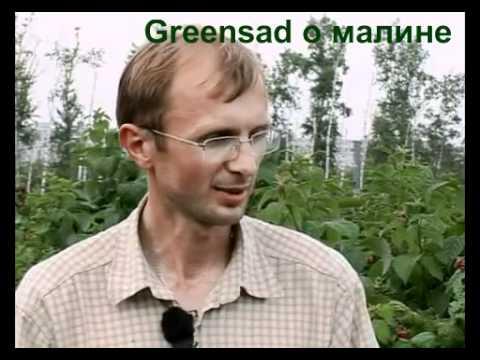 Обработка малины химпрепаратами (против вредителей)