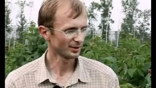 Обработка малины химпрепаратами (против вредителей)(Видео подготовлено садовым центром Greensad по материалам передачи