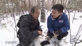 [远方的家]大好河山 长白山——火山造就的动植物宝库| CCTV中文国际