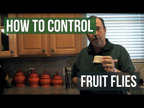 How to Control Fruit Flies