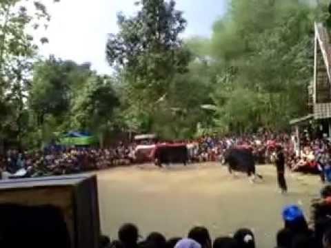 Bantengan Jaranan Jombang Seni Budaya Jawa Timur