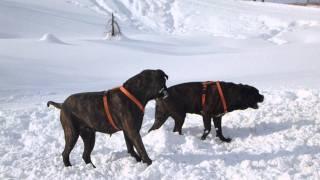 ひたすら雪を食べながら雪遊びをする4歳児とブルマス.