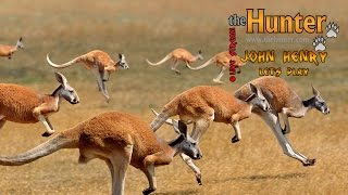theHunter - охота на рыжего кенгуру! [Stream]