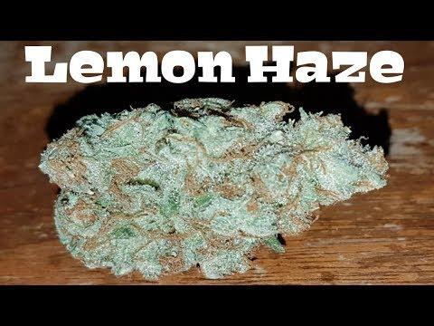 Canadian Cannabis Strain Review - Lemon Haze