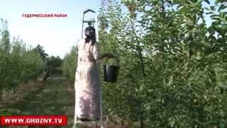 видео Сельское хозяйство – июльские работы