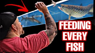 FEEDING every FISH in our STORE!!! ALL FISH have to EAT!