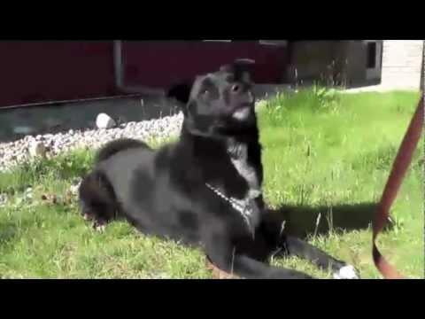 Winona - Adopt from the Cochrane & Area Humane Society